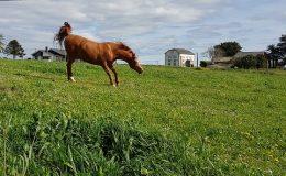 02 Casa caballo