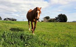 03 Casa caballo